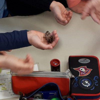 Das ist ein Häutungshemd einer Vogelspinne