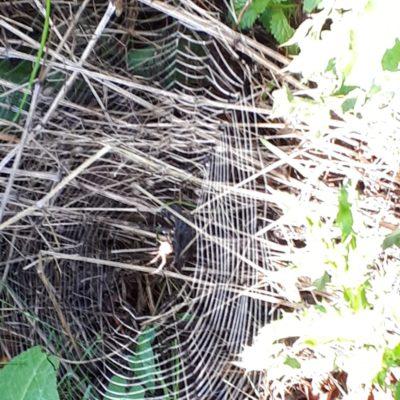 Ein Radnetz mit Spinne